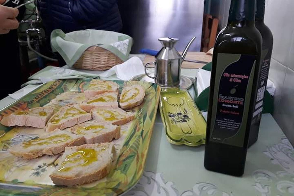 Agricoltori in rivolta per difendere la qualità dell'olio d'oliva Italiano