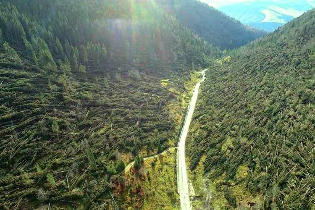 Per la Giornata Internazionale delle Foreste PEFC Italia lancia un appello per sostenere il NordEst colpito nel 2018 da Vaia