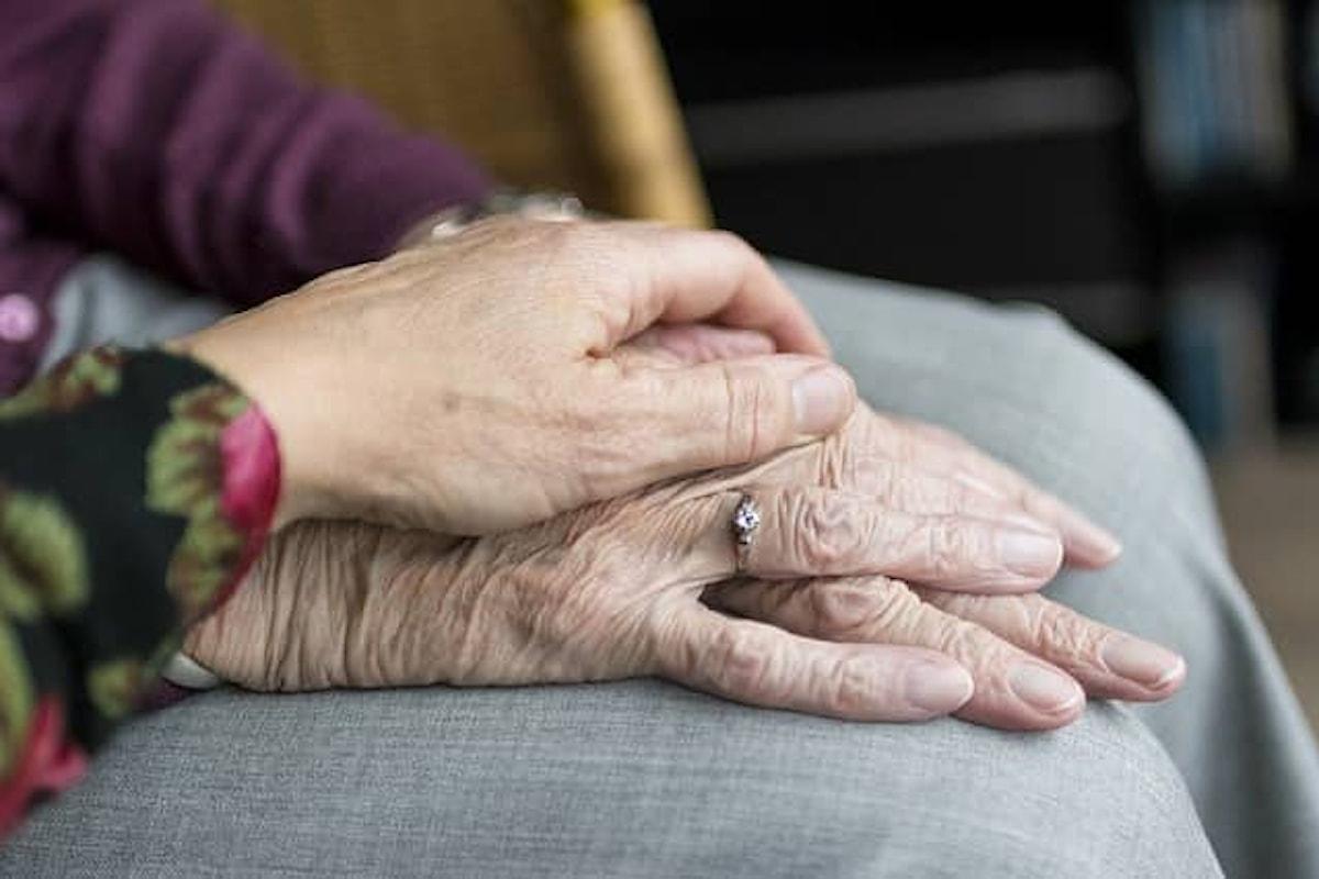 Alzheimer, farmaco estratto da un'alga bruna autorizzato in Cina