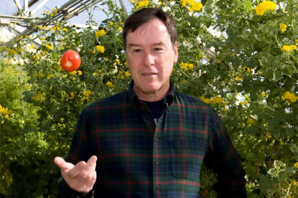 Pomodori: ecco perché non dovresti mai tenerli in frigo