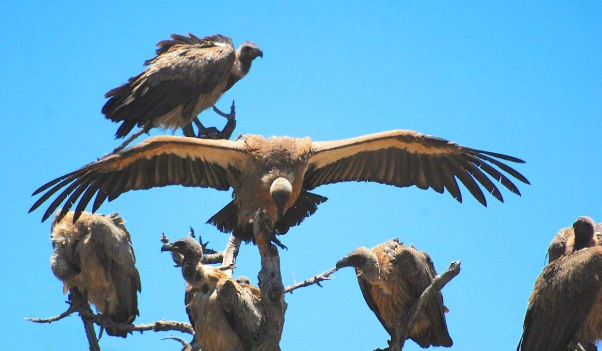 Muore un'artista e gli avvoltoi del consenso social non si lasciano sfuggire l'opportunità per un like... così sia anche per Battiato