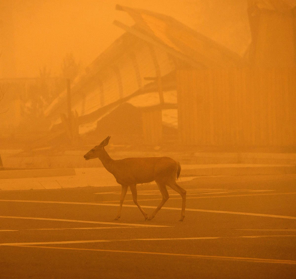 La California sta lottando contro le fiamme di Dixie, il secondo incendio più grande mai registrato nello Stato