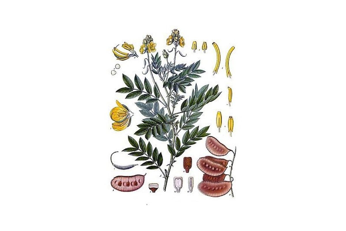 Combattere la stitichezza in erboristeria