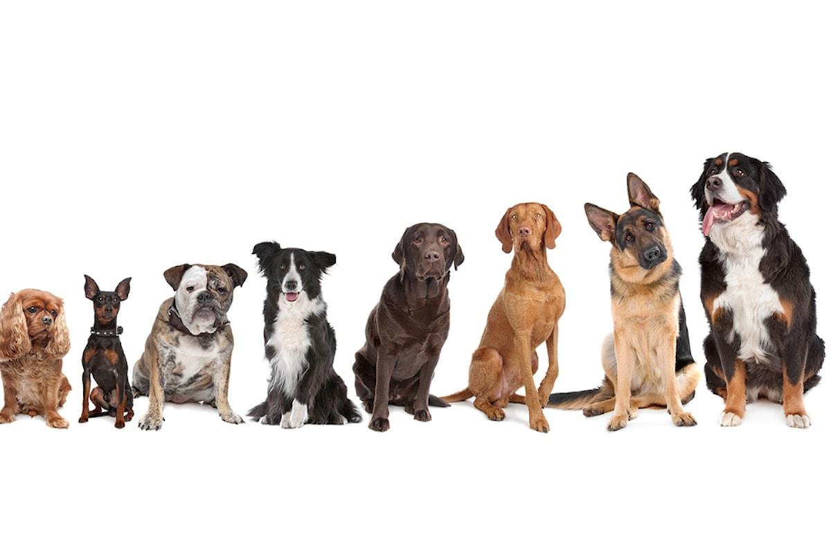 Il quiz di animalovers.it sulle razze canine