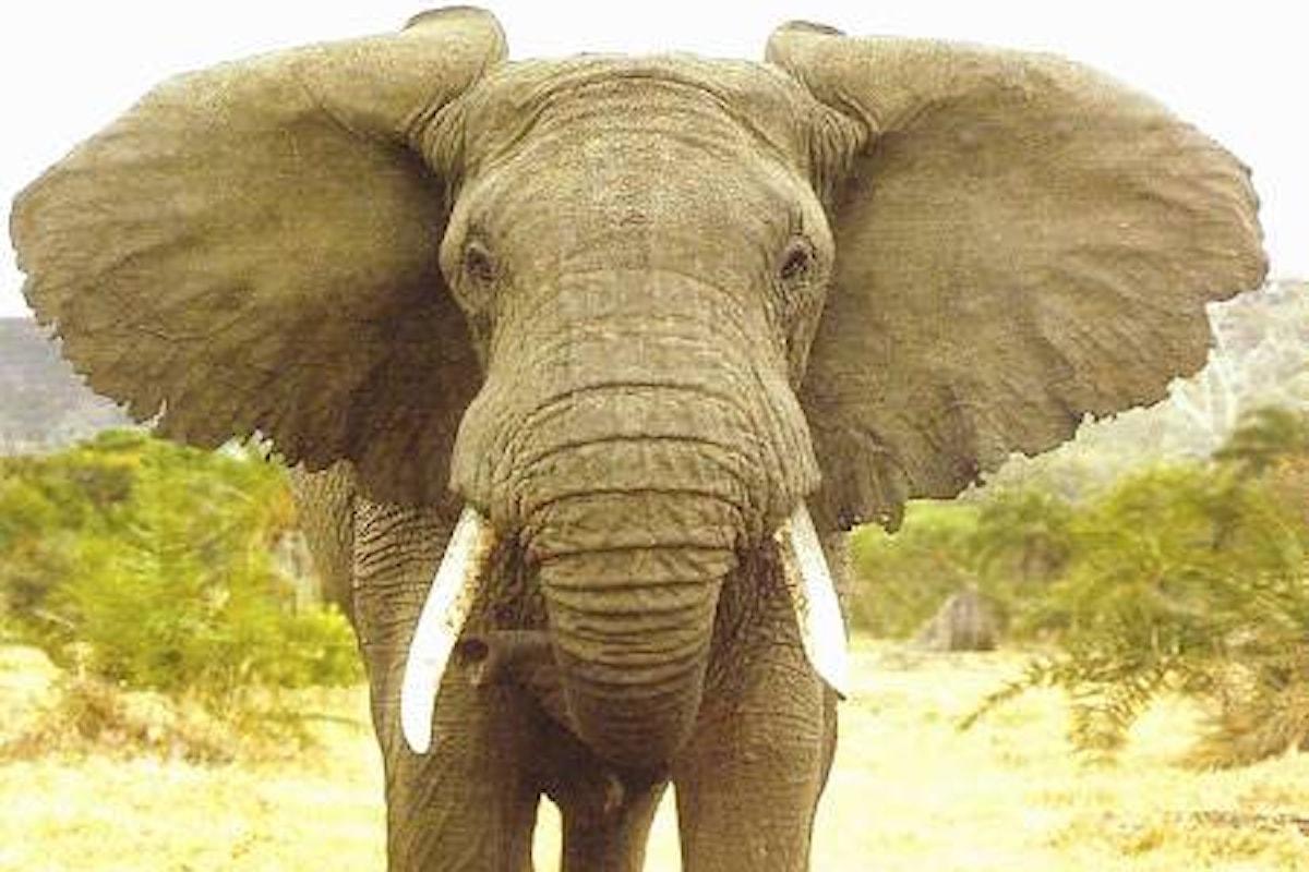 Il censimento degli elefanti africani