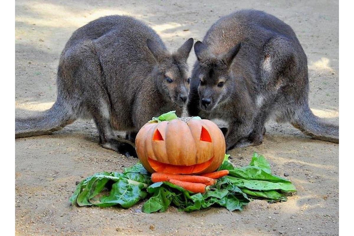 Halloween al Bioparco di Roma nei week end del 21-22 e 28-29 ottobre