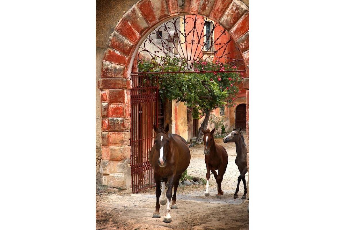 EquiMeDev: un ponte tra la Sicilia e la Tunisia per lo sviluppo dei territori rurali attraverso l'utilizzo del cavallo