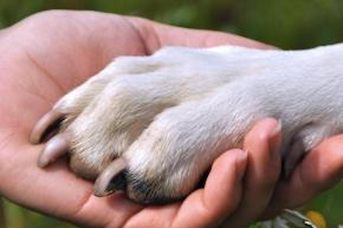 Vivere di cinofilia facendo l'addestratore di cani o l'educatore cinofilo?
