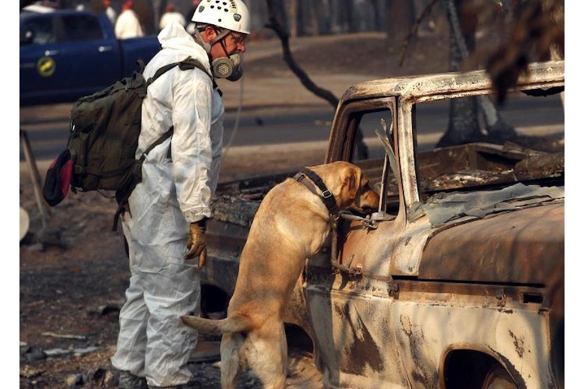 Trump sui luoghi dell'incendio che ha devastato la contea di Butte nella California del nord