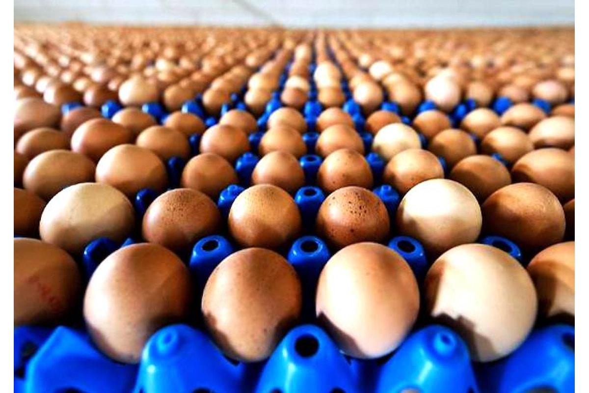 Due casi accertati di positività di uova al fipronil