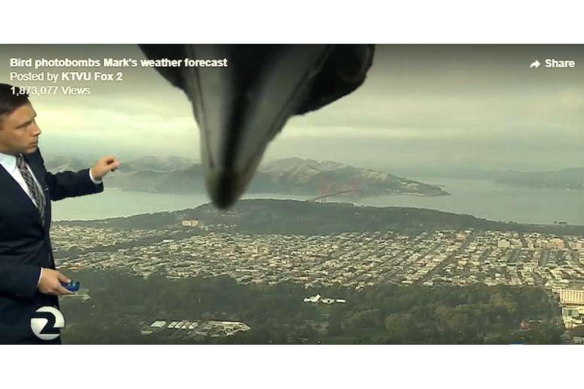 Un mostro di proporzioni gigantesche ripreso in diretta tv!